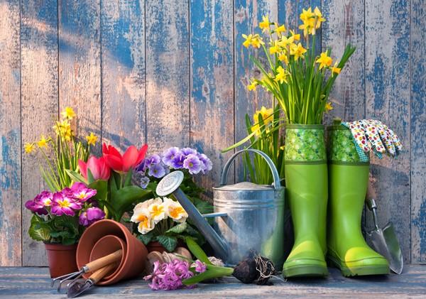 5 Easy Tips For A Perfect Garden
