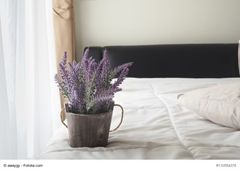 The Best Houseplants for Each Room Of Your Home