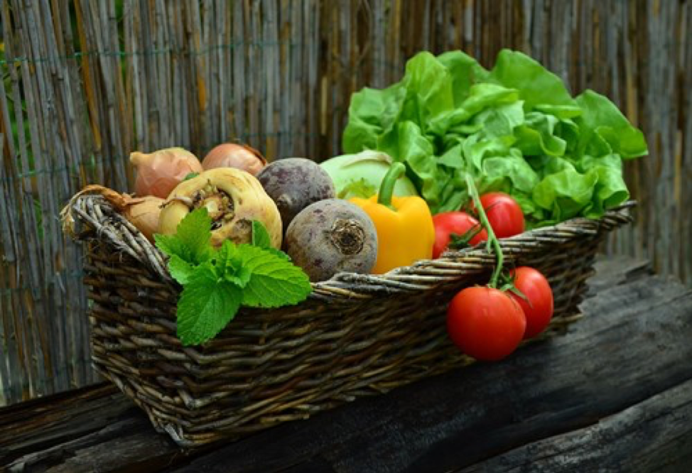 Vegetable Gardening in New Hampshire