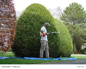 Best Practices for Selecting a Professional Landscaper