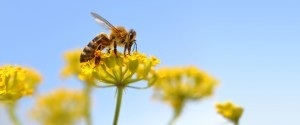 How to Protect Yourself from Insects