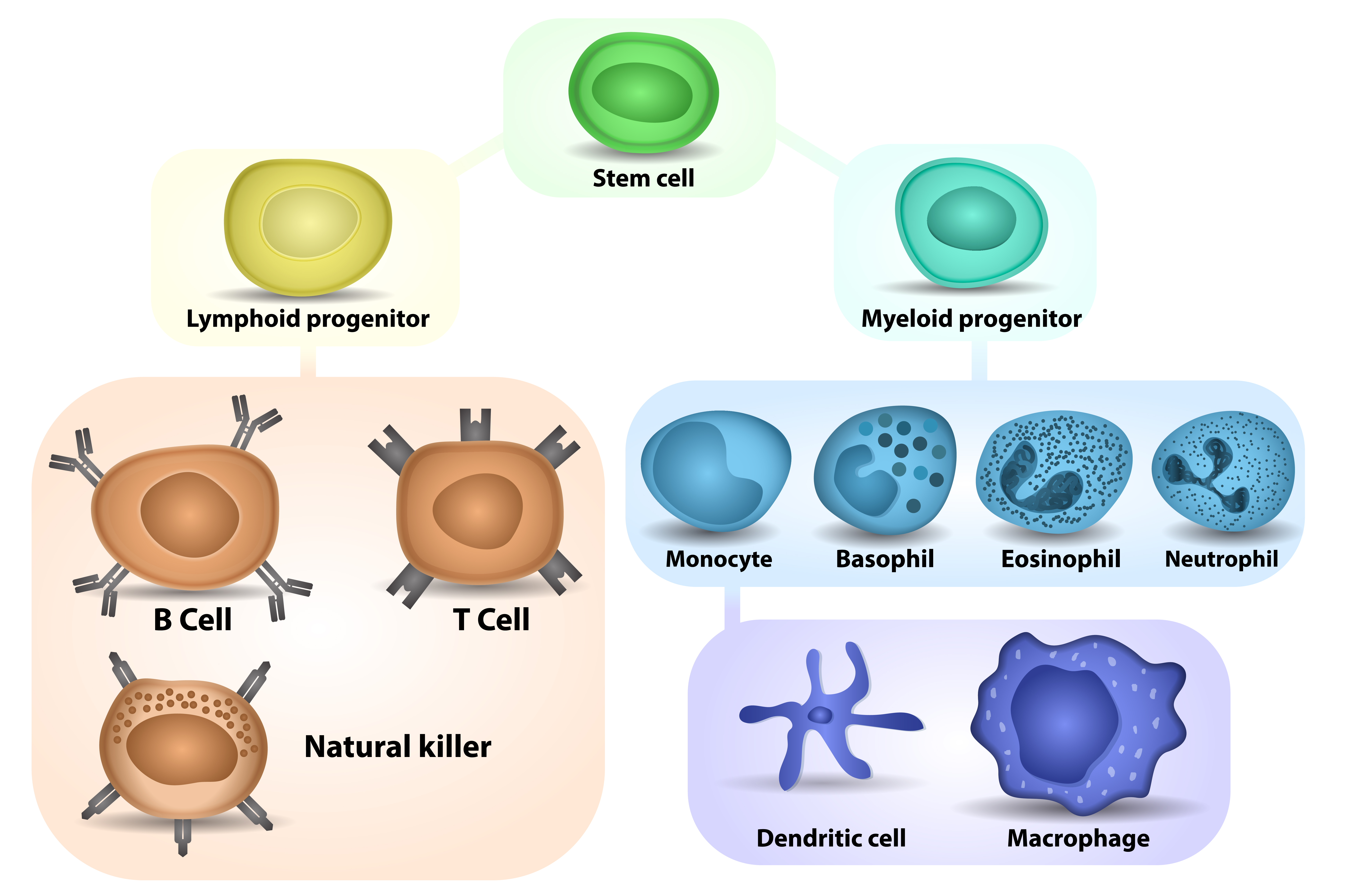 A method to genetically engineer monocytes (20180236)