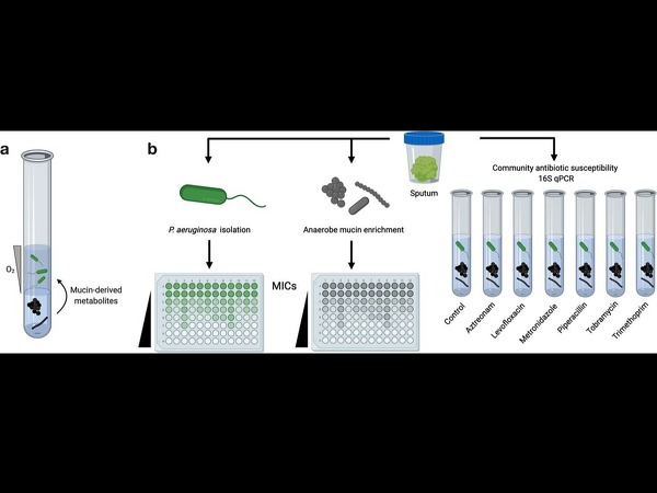 AST assay workflow to determine antibiotic Minimum Inhibitory Concentration (MIC) from cystic fibrosis patient sputum