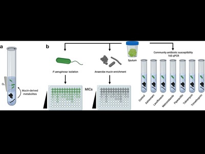 Community-based antibiotic screening method for polymicrobial infections (2020-090)