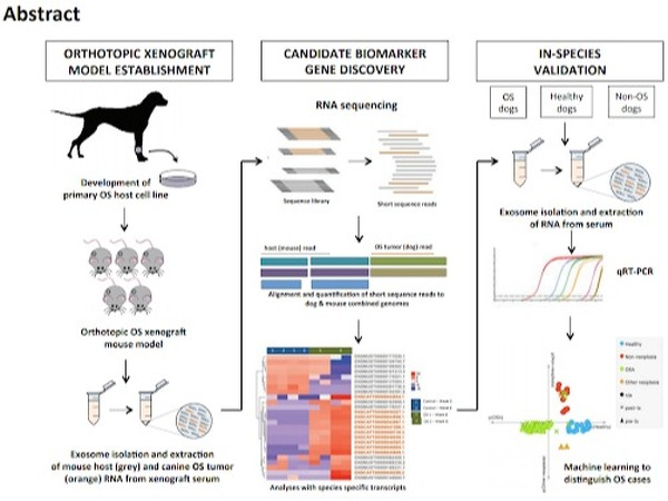 Schematic for identification of cell-free osteosarcoma biomarkers