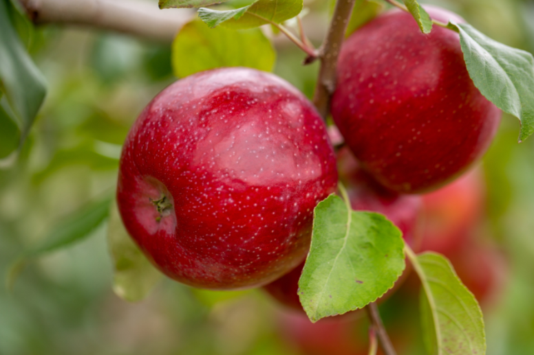 Triumph™ Brand Apples