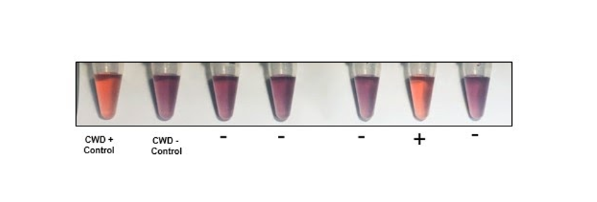 Assay for detecting misfolded proteins