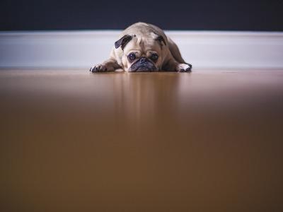 Canine Frustration Questionnaire (CFQ)