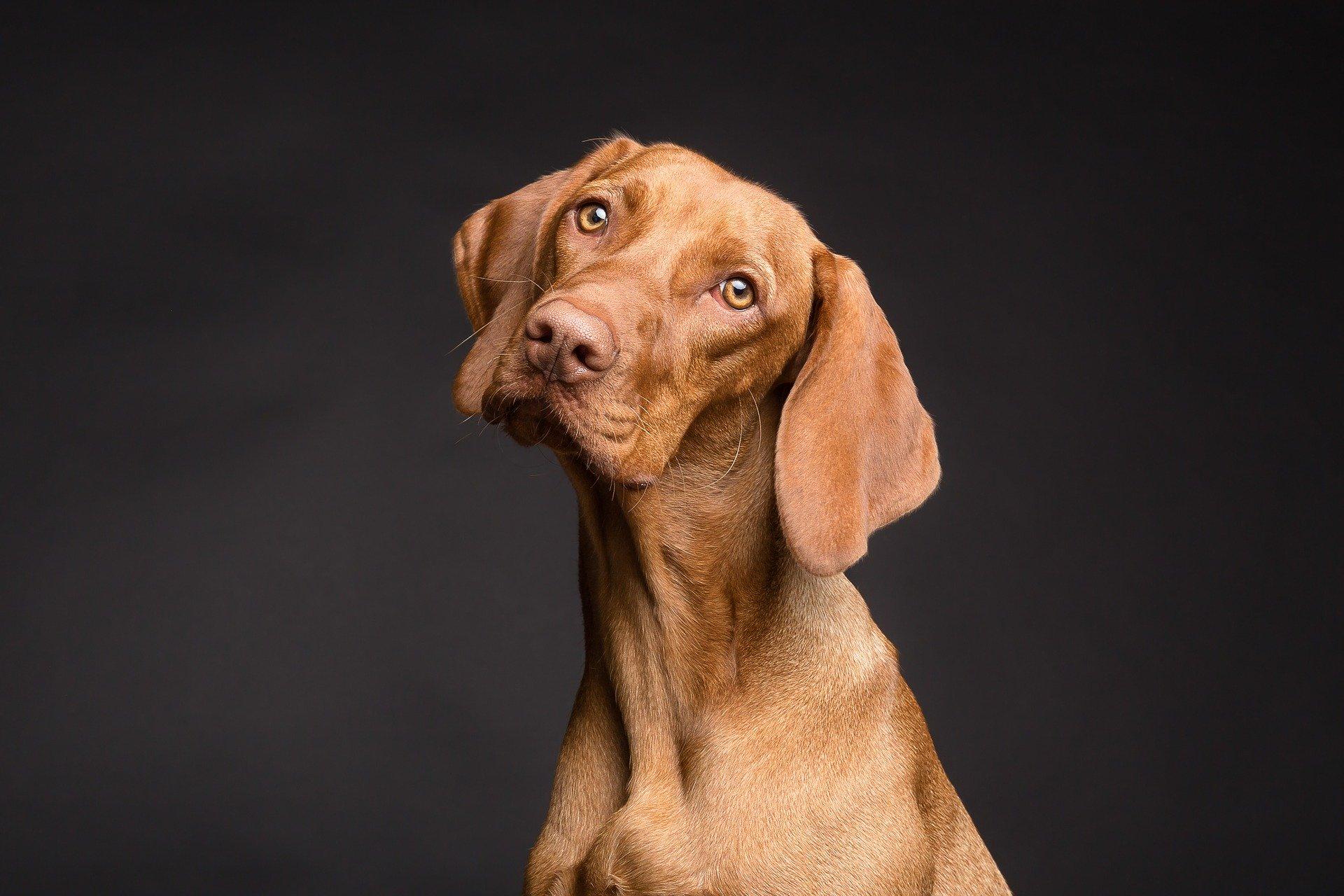 The Dog Impulsivity Assessment Scale (DIAS)