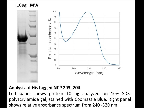 His Tagged NCP analysis (204/204) - SDS PAGE, Absorbance spectrum