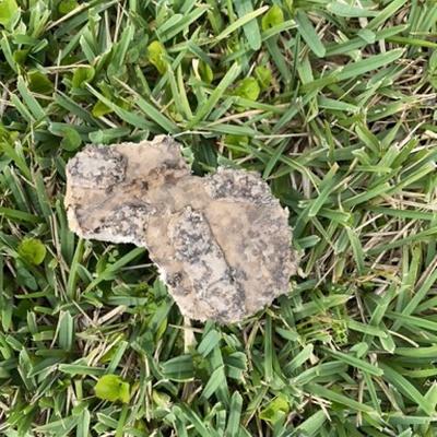 Trash near Ashton Look, Ormond Beach, Volusia County, Florida, 32174, United States