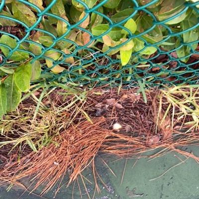 Trash near 188, Shadow Crossing Boulevard, Ormond Beach, Volusia County, Florida, 32174, United States