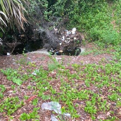 Trash near 1429, Bermuda Estates Drive, Ormond Beach, Volusia County, Florida, 32174, United States