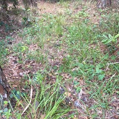 Trash near Hunters Ridge Boulevard, Ormond Beach, Volusia County, Florida, United States