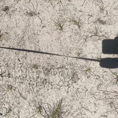 Trash near 3237, State Road 40, Ormond Beach, Volusia County, Florida, 32174, United States