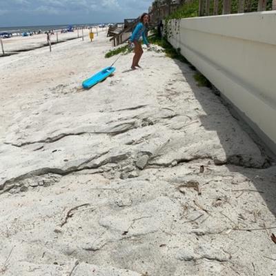Trash near Milsap Road, Ormond Beach, Volusia County, Florida, 32176-8105, United States