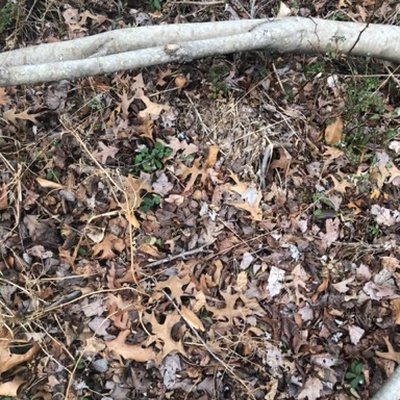 Trash near 12214, Asbury Drive, Tantallon Hills, Piscataway Hills, Fort Washington, Prince George's County, Maryland, 20744, United States