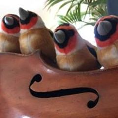 Goldfinch String Quartet String Quartet in the UK