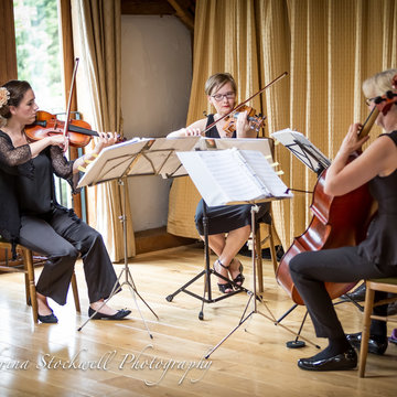 Piacere String Quartet's profile picture
