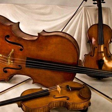 String Trio Delights's profile picture