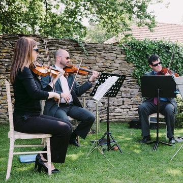 Kings Quartet's profile picture