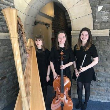 Willow Trio's profile picture