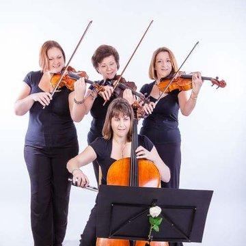 The Parisi String Quartet's profile picture