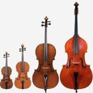 Teesside String Quartet's profile picture