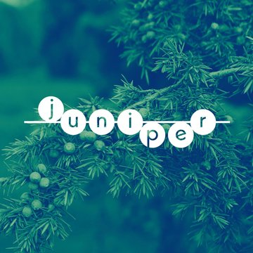 Juniper's profile picture