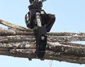 Rotating Heavy Duty Log Grapple 3.7 sq ft ROTO4552HD