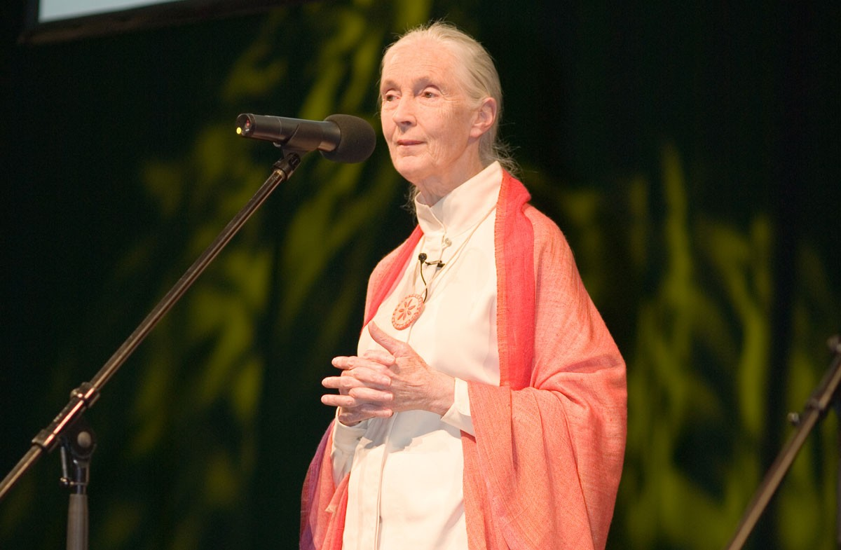 Jane Goodall: Compassion and Perseverance
