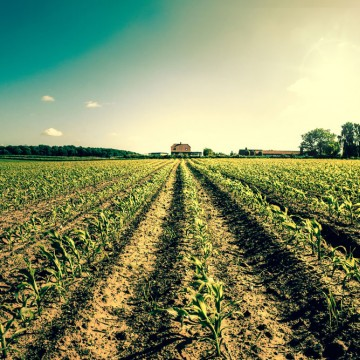 Field crops leading to a farmhouse—ESME.com