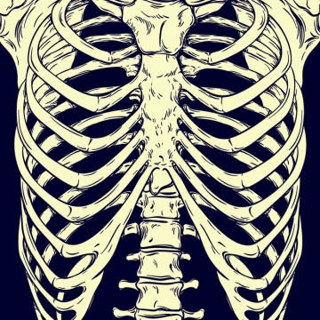 Hand-drawn line art of an anatomically correct human rib cage. White over blue background vector illustration—ESME.com
