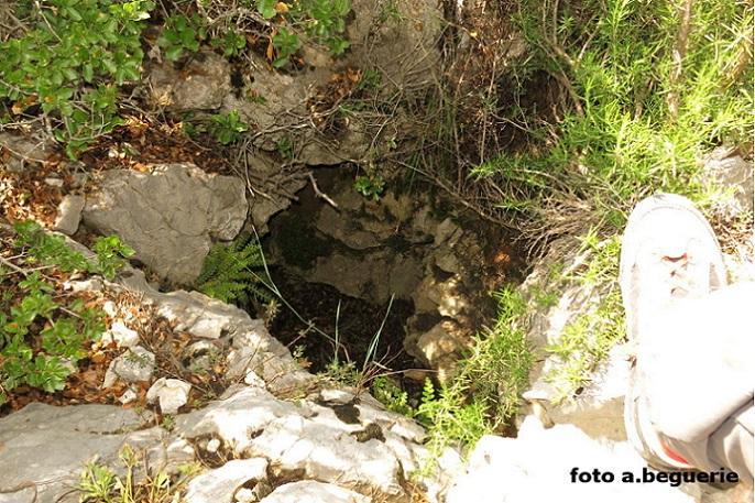 foto Avenc Net