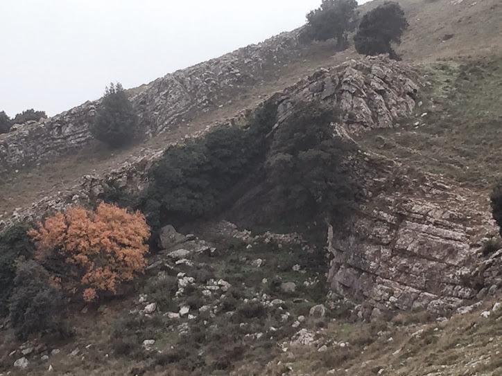 foto Cova del Bosc