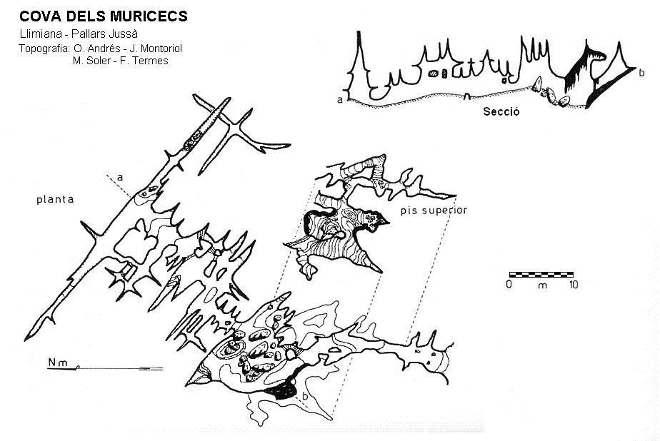 topo Cova dels Muricecs