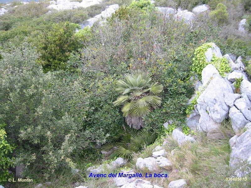 foto Avenc del Margalló