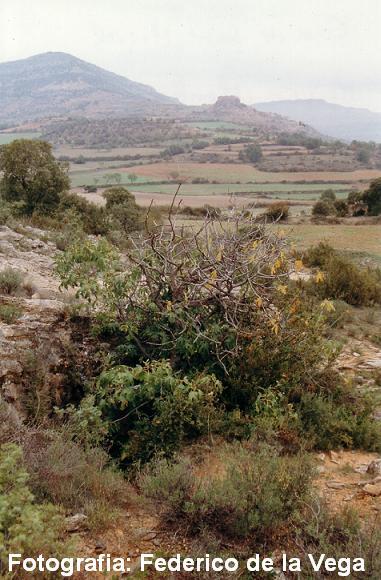 foto Cova de Sant Miquel
