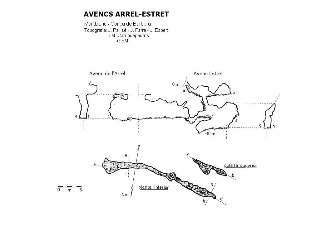 topo Avencs Arrel-estret