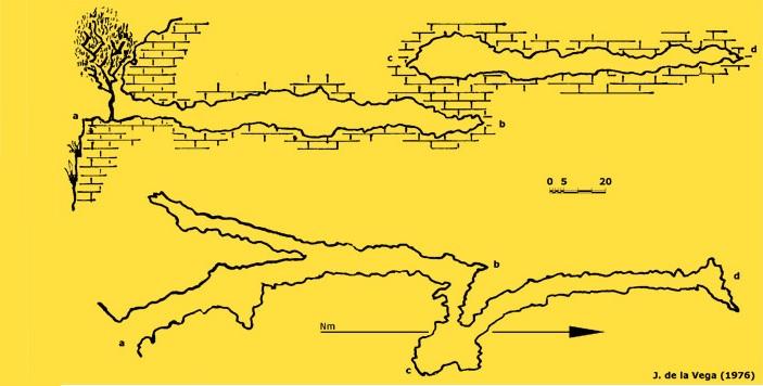 topo Cova de les Llenes