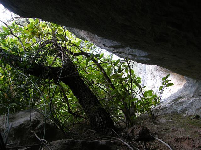 foto Cova d'Estenalles