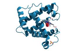 HGH Molecule