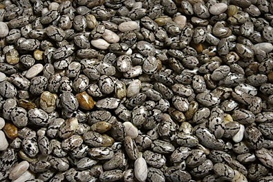 Chia Seeds - Learn what chia seeds can do for you - eSupplements.com