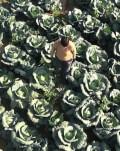 Varză, cartofi și alți demoni Documentar pe terasă