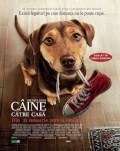 A Dog's Way Home / Drumul unui câine către casă