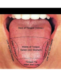 CURS Diagnoza dupa aspectul limbii