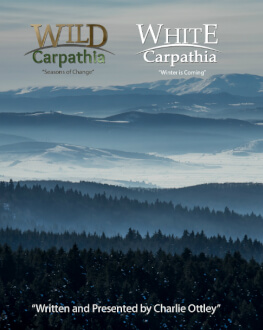 WHITE CARPATHIA Alpin Film Festival 2020