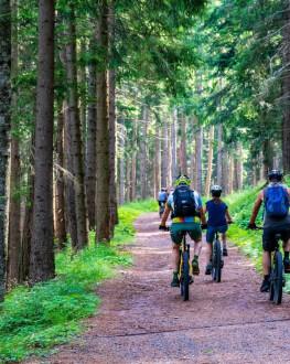 Plimbare cu bicicleta prin natura - cadoul ideal pentru corpul tau