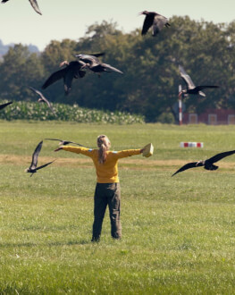 TO TEACH A BIRD TO FLY (2020) GreenTech Film Festival 4