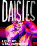Daisies / Margarete ARTA-Acasă